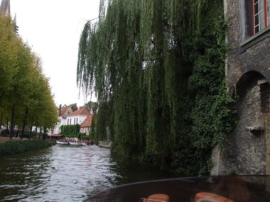 Willows line canal in Bruge