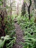 Hawaii path, by Kris Bordessa