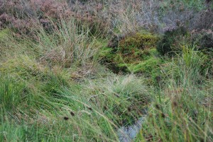 Boggy field, Culloden, Scotland