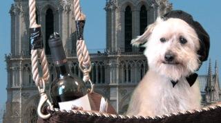 Parisian Frankie, Edie Jarolim's dog