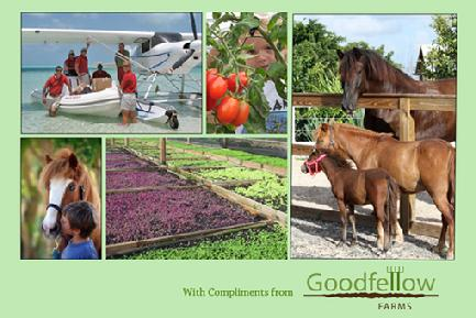 Postcard from Goodfellows' Farm