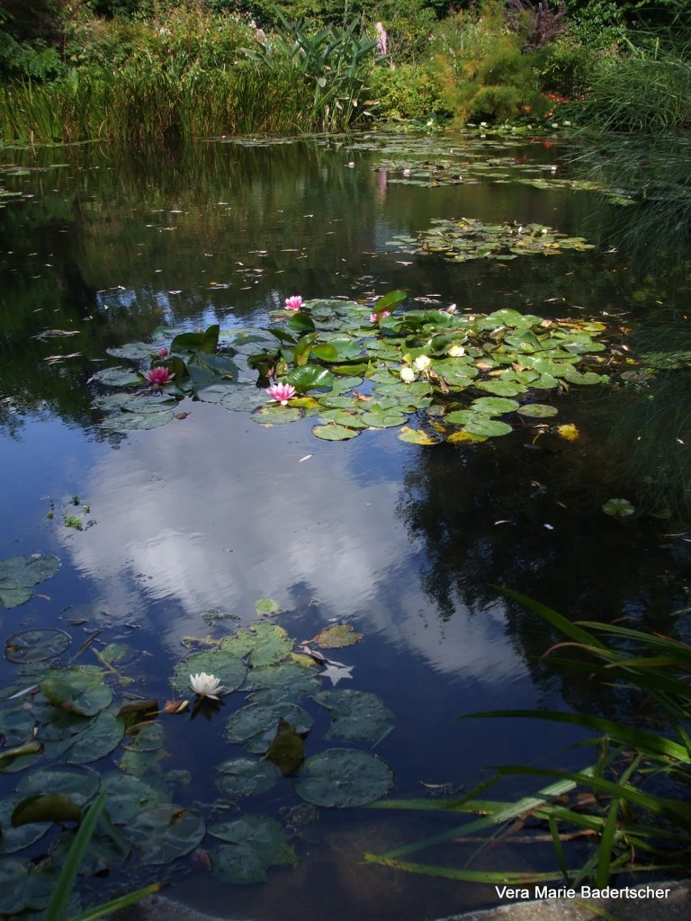 Monet's lily pond with clouds in water