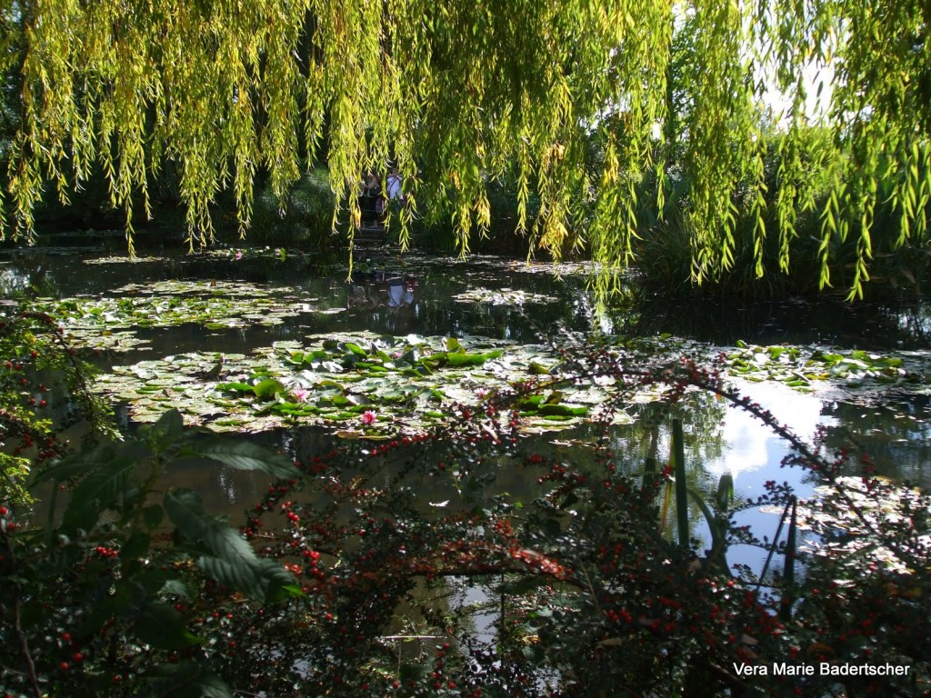 LIly Pads under a willow Tree in Monet's garden