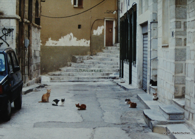 Cats in an alley, Ermopoli, Syros, Greece
