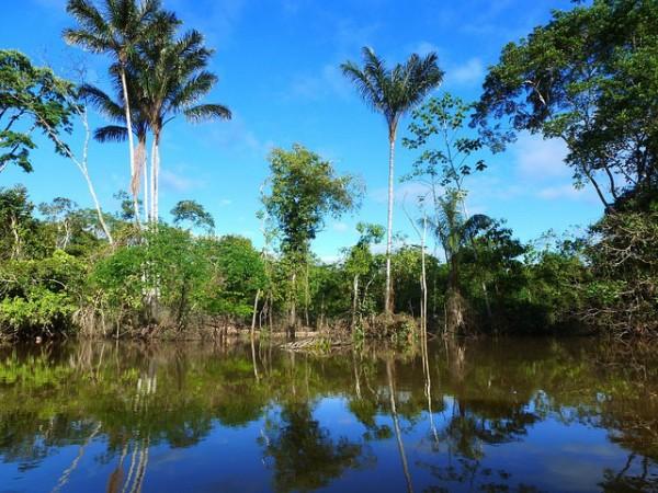 Amazon in Peru