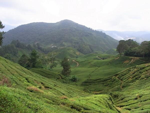 Malaysia Highlands Tea Plantation