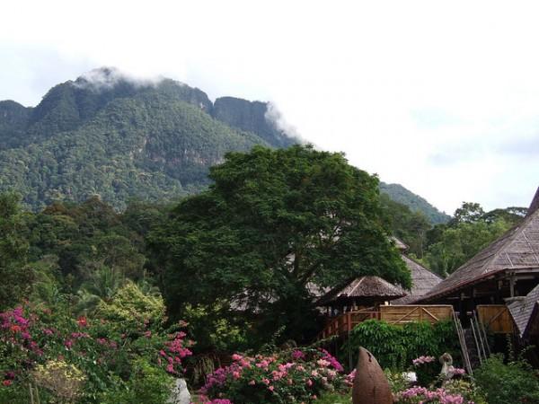 Malaysia Mountain mist