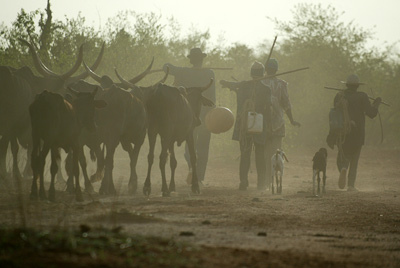 Niger, cattle herders in dust