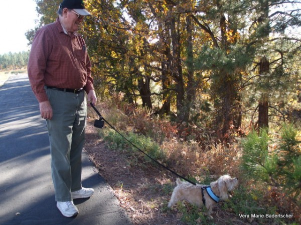 Bogie checking out new flora at Woodland Park, Pinetop