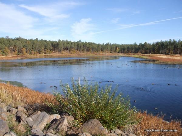 Woodland Park Lake