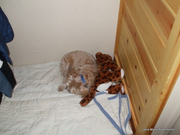 Bogie and his stuffed leopard