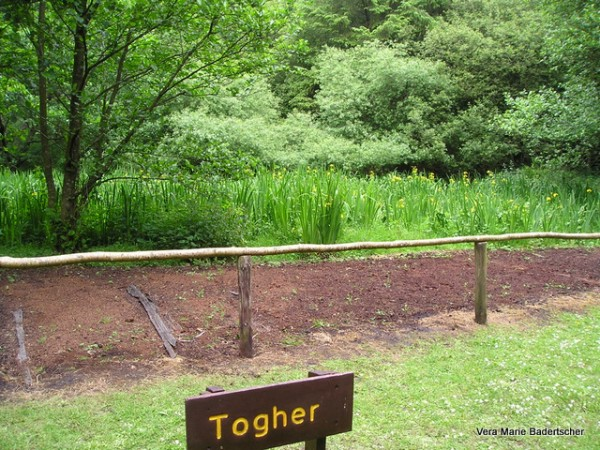 Ancient corduroy road through peat bog