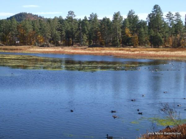 Woodland Park Lake , Pinetop AZ