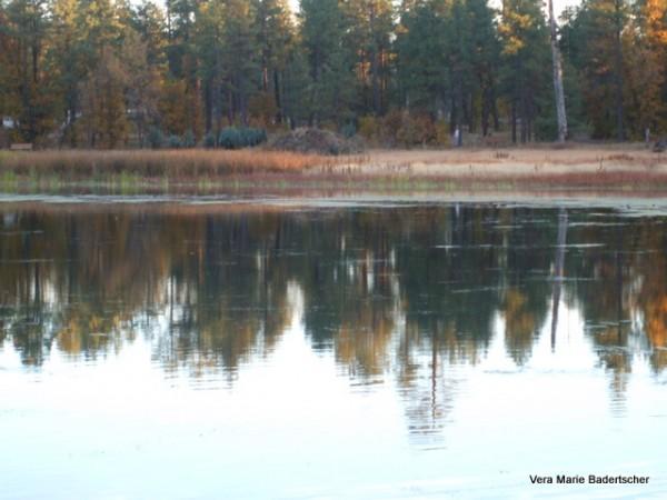 Autumn at Woodland Lake, Pinetop