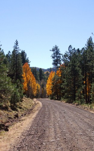 Aspens and Pines on Apache Reservation
