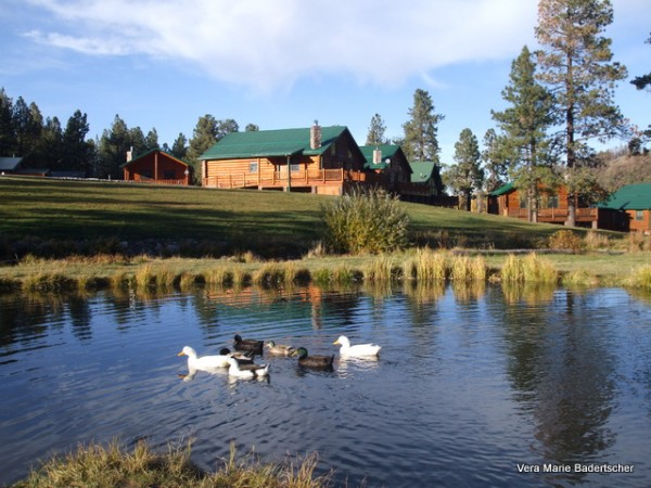 Ducks on a pond at Greer Lodge