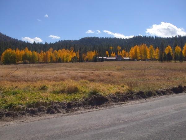 Aspens and pines along Coronado Trail in eastern Arizona