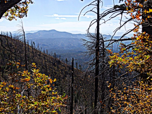 Remains of forest fire from Coronado Trail lookout