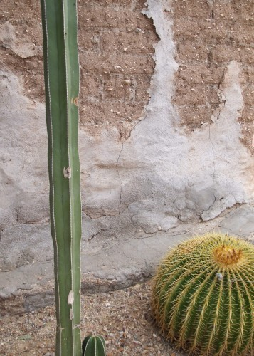 Tanque Verde Guest Ranch Cactus and adobe contrast