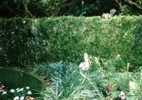 Animals in the Garden, Cypress Gardens