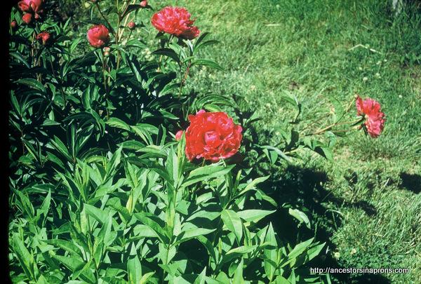 Kaser garden Columbus Ohio