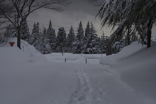 Akita is a winter wonderland covered in snow.