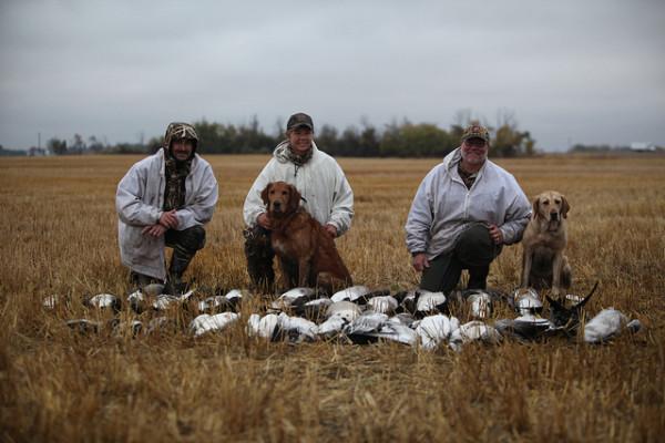Saskatchewan duck hunting