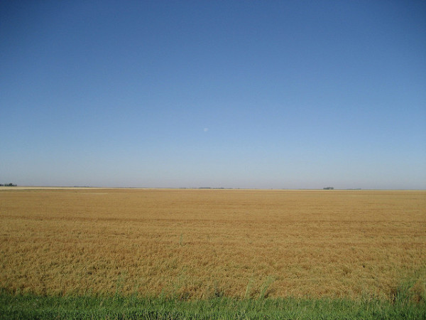 Saskatchewan wheat field
